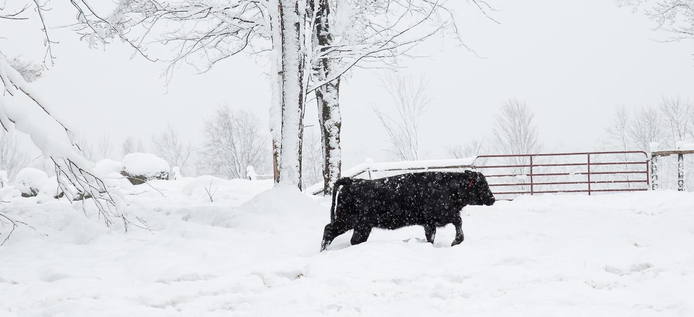 Tuckers Black Angus Ranch Beef 4