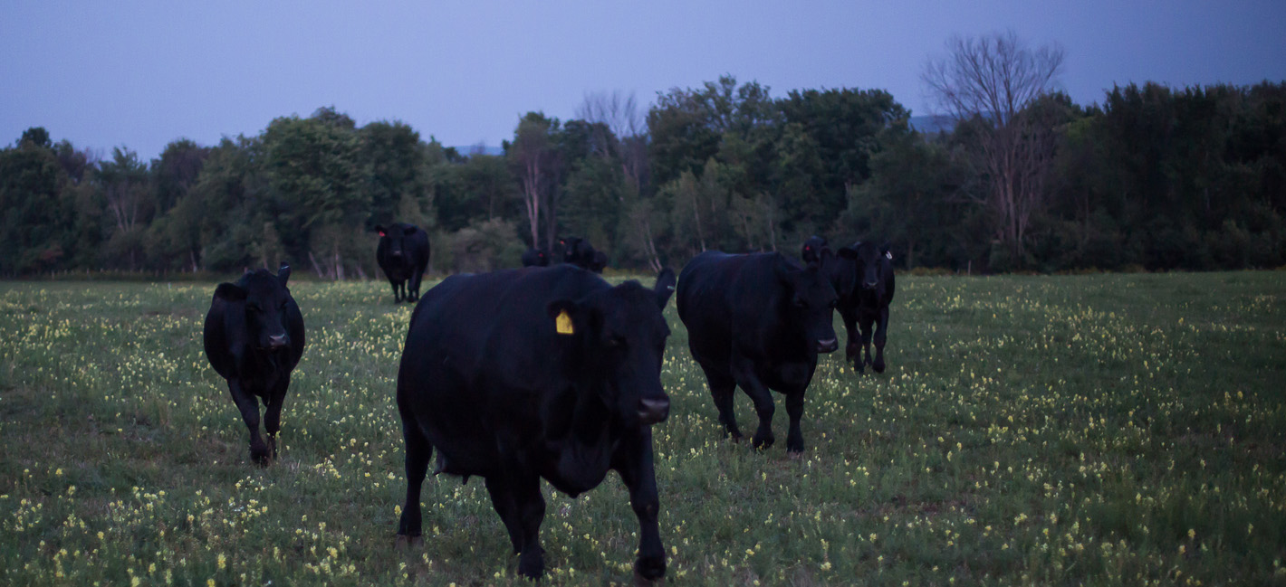 Tuckers Black Angus Ranch Beef 1