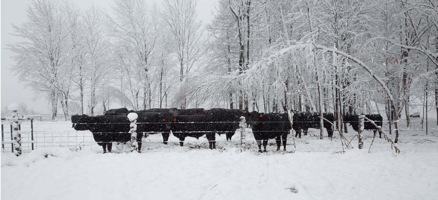 Tuckers Black Angus Ranch Beef 5